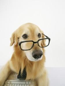 golden-retriever-wearing-eyeglasses