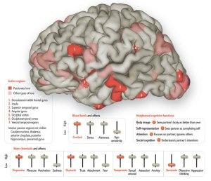 braingraphsci