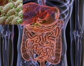 Gut-Flora-Bacteria