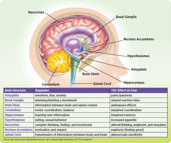 neurological effects of marijuana Summary: marijuana and cannabinoids: a neuroscience research summit is being convened by the national institutes of health (nih), which will focus on the neurological.