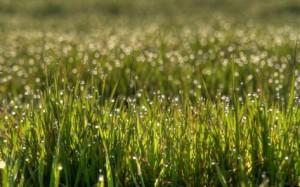 Dazzling-bokeh-rain-drops-nature-landscape-grass-facebook-cover-photos-473x295