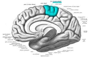 brainpic