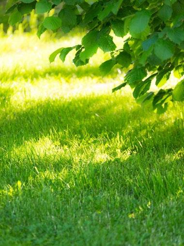 SHADYGREEN-Grass-Seed